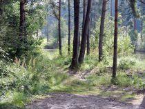 fischteich, fishpond, vivier, peschiera, vivaio, cetárea, cetaria, estanque, teich, pond, étang, laghetto, stagno, wald, forest, bois, bosco, foresta, selva, klein finland,