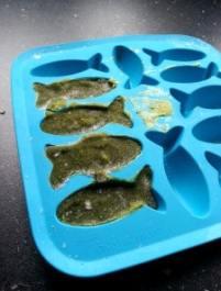 gel fish food
