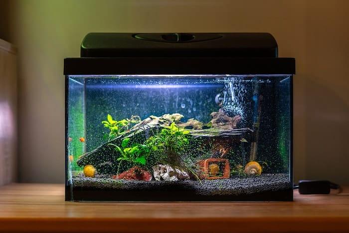 Aquarium Problems