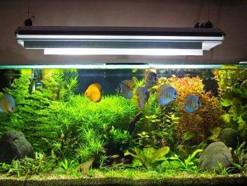 aquarium tips