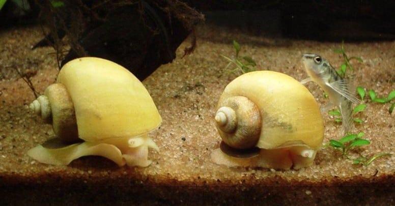 is my snail dead or sleeping