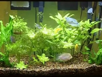 20-Gallon Fish Tank size