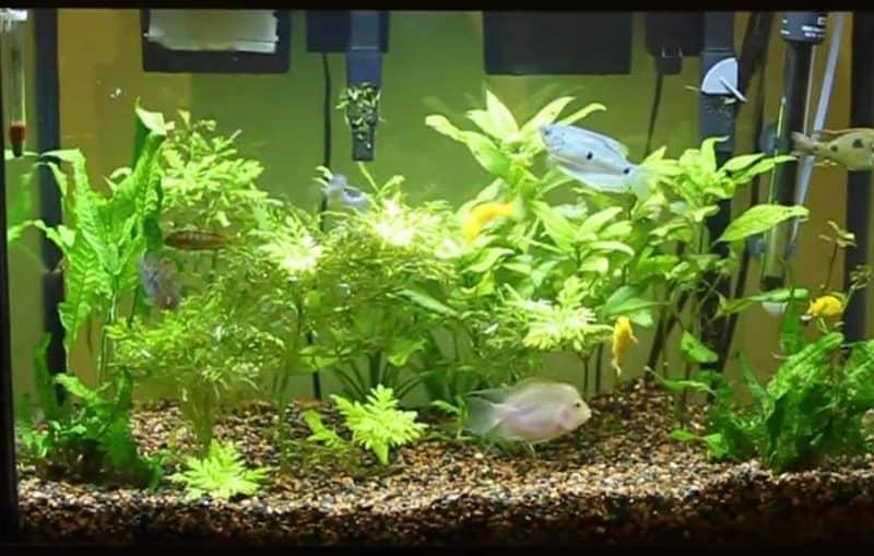 20-Gallon Fish Tank size
