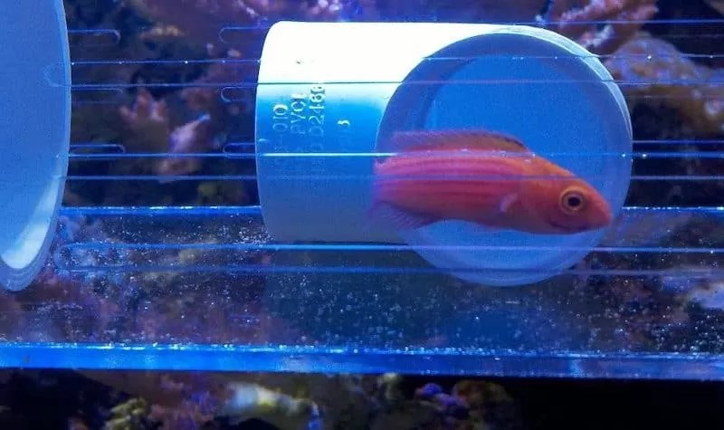 Acclimating Fish With The Floating Method