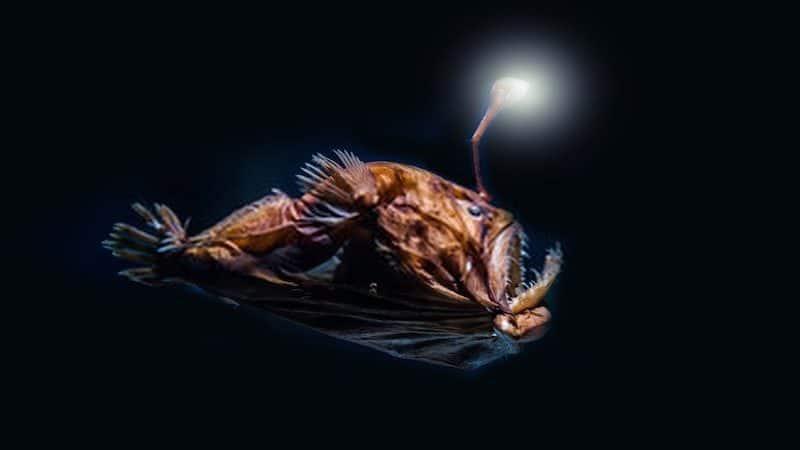 Can Aquarium Fish See in The Dark