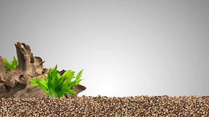 Can You Grow Aquarium Plants In Gravel
