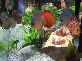 Fish Acclimation Methods