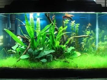 Freshwater Fish for 10-Gallon Tank