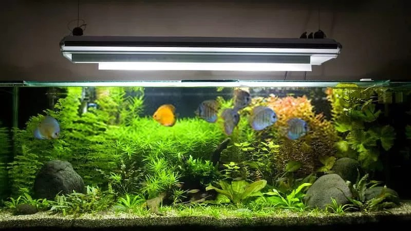 How Long Should You Leave Aquarium Lights On
