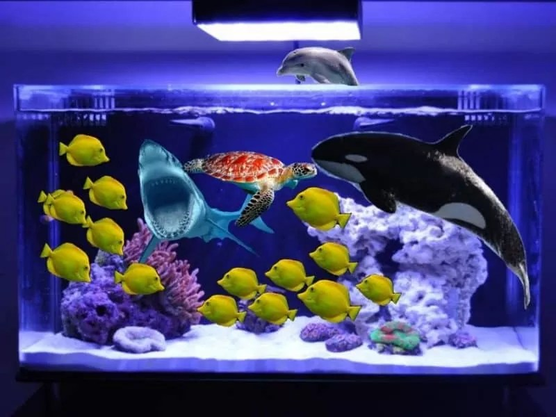 How to Acclimate New Fish