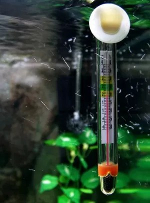 best temperature for aquarium plants