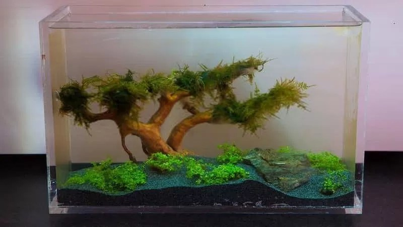 Best Ways to Clean An Acrylic Aquarium