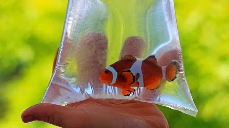 How Long Can Aquarium Fish Stay in a Bag