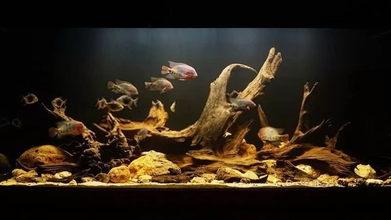 How Long Should You Boil Driftwood for Your Aquarium