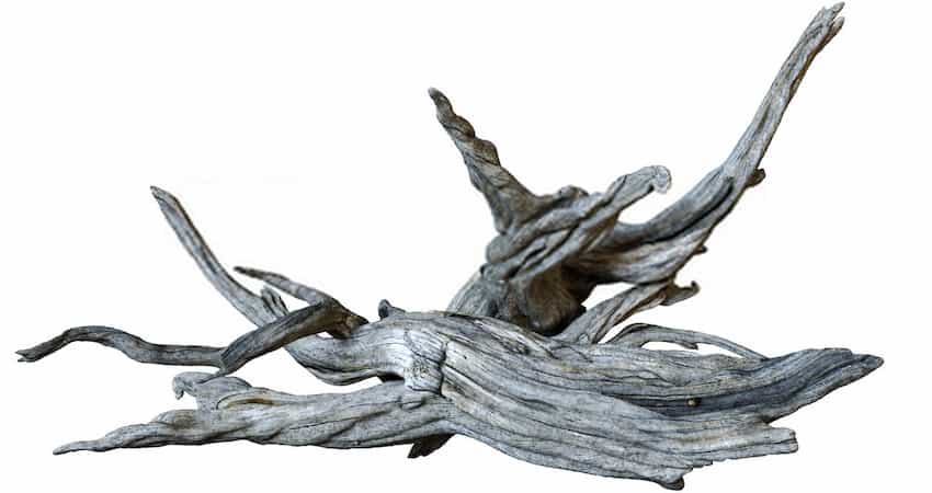 Things of benefit that inspires boiling driftwood for your Aquarium