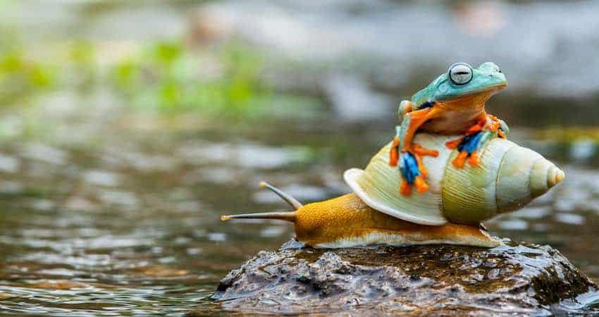 Snail as Catfish Food