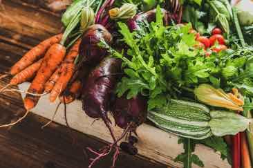 Vegetables as Catfish Food