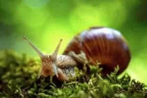 Calcium Supplements for Snails
