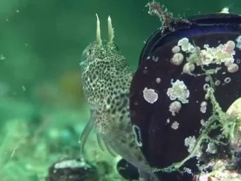 How to Protect Fish Eggs in an Aquarium