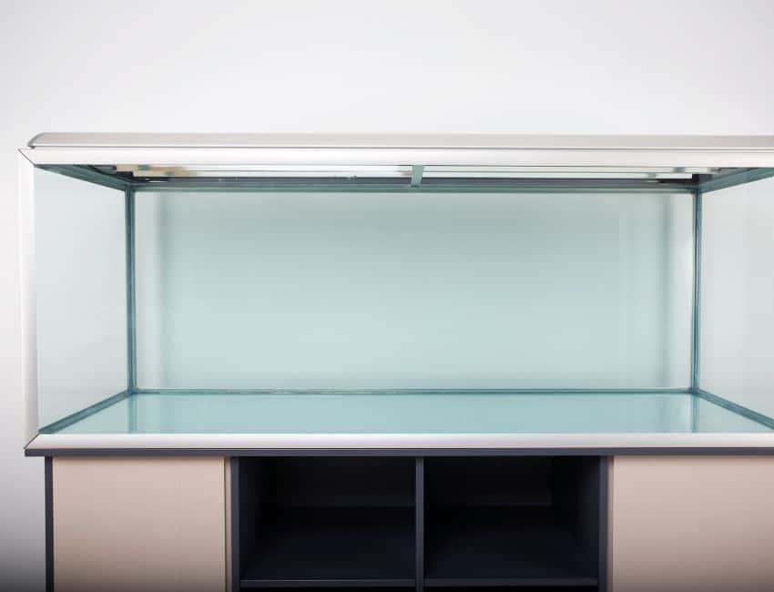 Building an Ideal Community Fish Tank