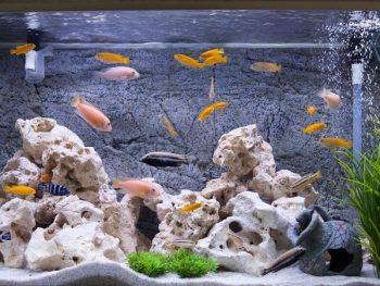 How To Anchor Aquarium Plants