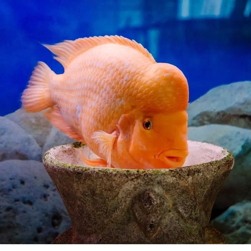 How long can your fish Live without Food