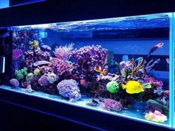 Saltwater Fish Respond in a Freshwater Aquarium