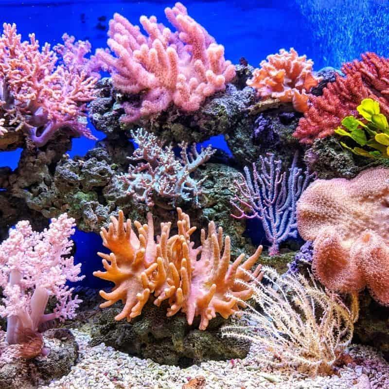 Tank Habitat Decor for Saltwater Fish
