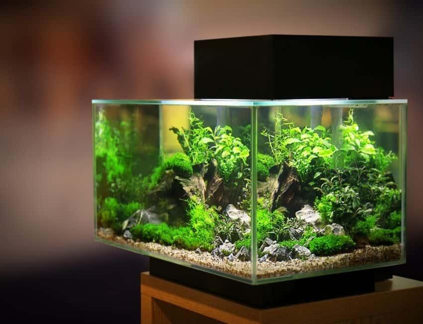 what to raise in a 55 gallon aquarium