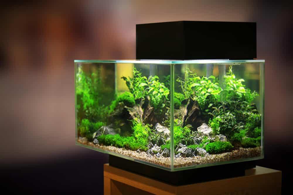How To Maintenance the Self-Sustaining Aquarium