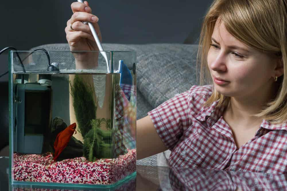How much food should feed your betta fish