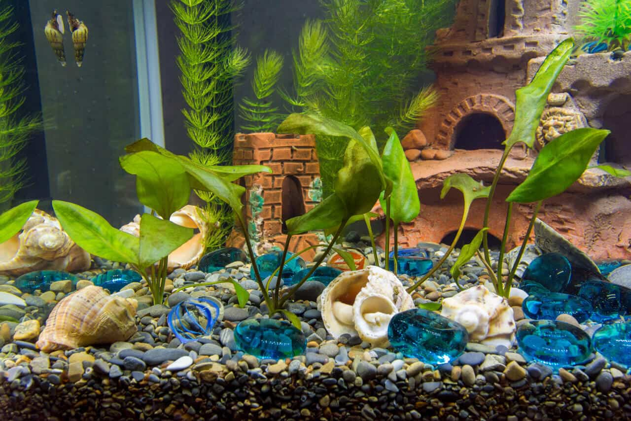 In An Aquarium, The Use And Benefits Of Hornwort