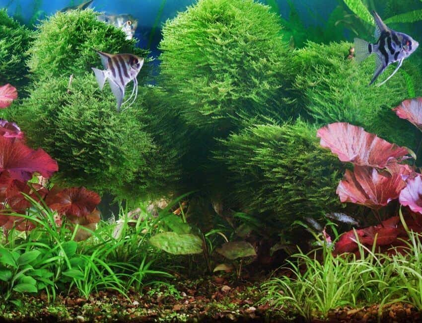PROBLEMS WITH AQUARIUM PLANTS DIAGNOSING