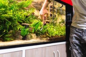 Process of Making a Self Sustaining Aquarium