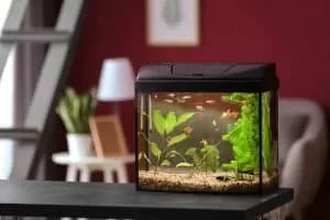 What Item You Need To Make Sustaining Aquarium
