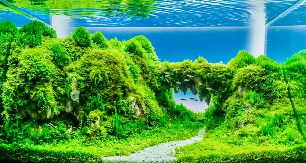 What is an aquarium plant