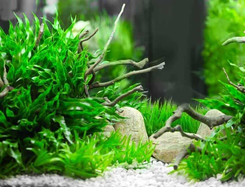 What is an associate aquarium, exactly
