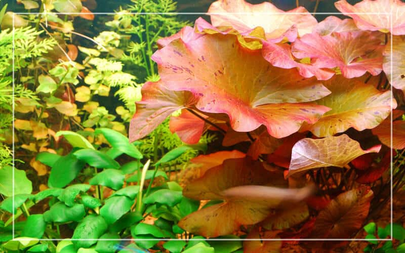 What is an associate aquarium plant