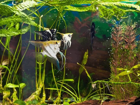floating aquarium plants
