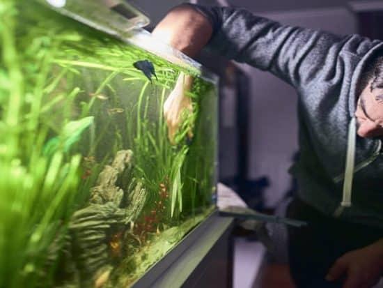 how to clean algae off aquarium plants