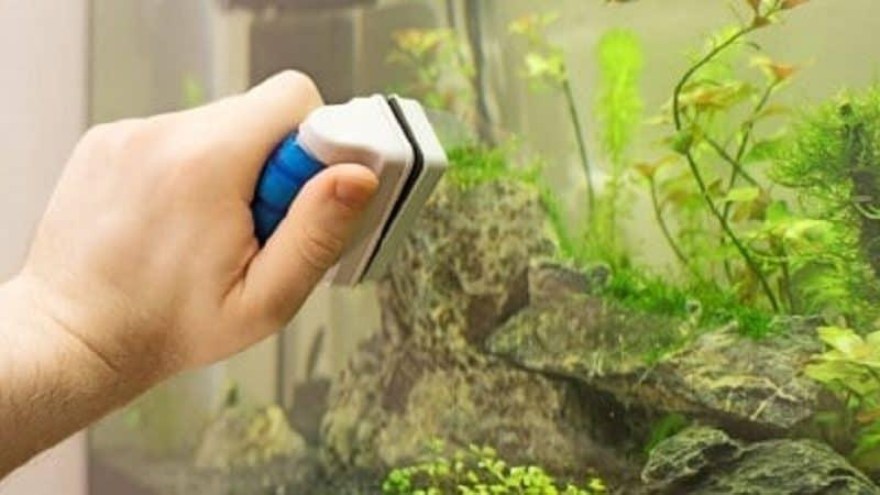 how to clean plastic aquarium plants