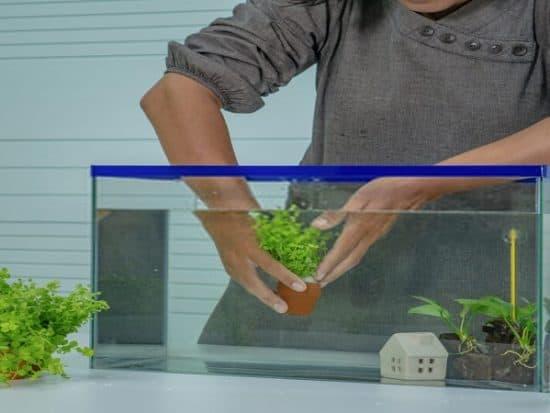 self sustaining aquarium for betta fish