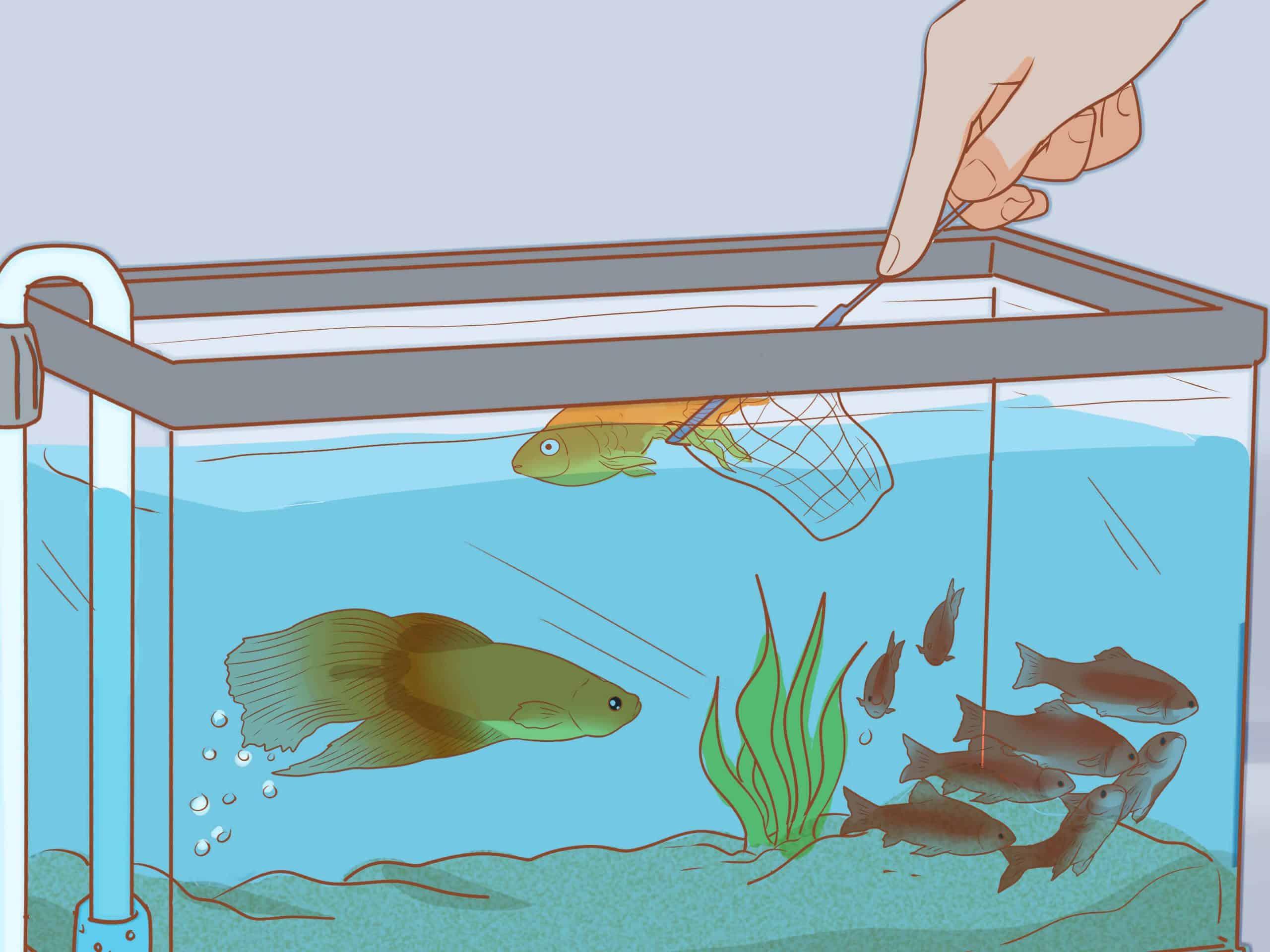 How To Add New Fish To Aquarium
