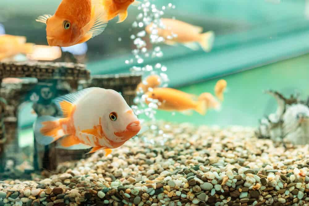 What causes stress to fish in an aquarium