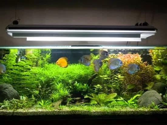 best light spectrum for aquarium plants