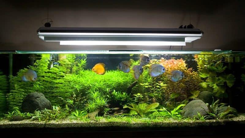 best light spectrum for aquarium plants