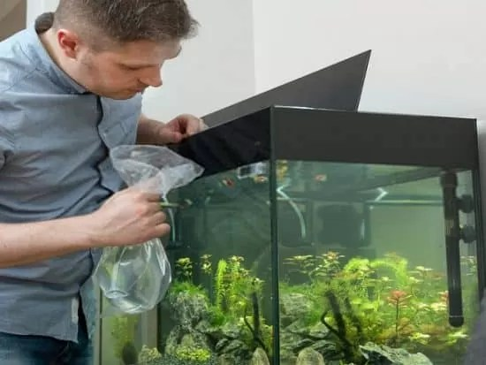 how to introduce new fish to an aquarium