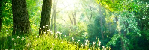 Hypnotherapy-nature-e1383510476514