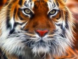 Fractal Tiger3327228499_222cd02aba