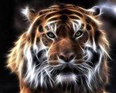 fractal_tiger_by_mceric